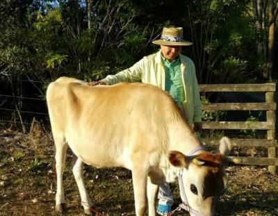 2016.02.02 ニュージーランドで育てている牛