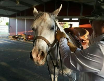 プリンセスという馬