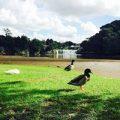 自然に心が平和になるニュージーランド