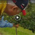 りんごの初収穫