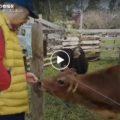 人と動物が溶け合う牧場を