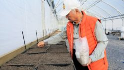 2020.5.8 カクレミノの種まき@ケリケリ, ニュージーランド