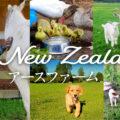 自然を身近に感じられる牧場~ニュージーランドのアースファーム