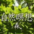 自然瞑想~自然治癒力を高めるカクレミノの森でヒーリング